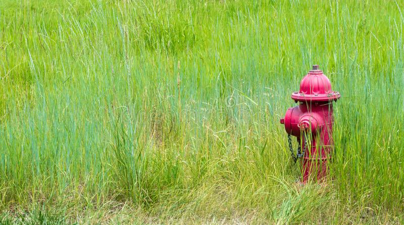 Red fire hydrant in a lush green pasture royalty free stock photos