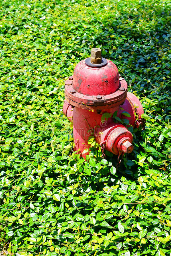 Free Red Fire Hydrant With In Grass Stock Photography - 53922542