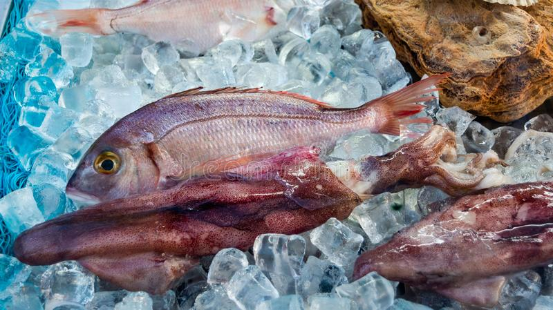 Red fish on ice. Fresh fish on ice, red, dead, restaurant, octopus, fridge, lot, food, raw, fat, cold, whole, omega, healthy, salmon, view, lime, diet, keta stock images