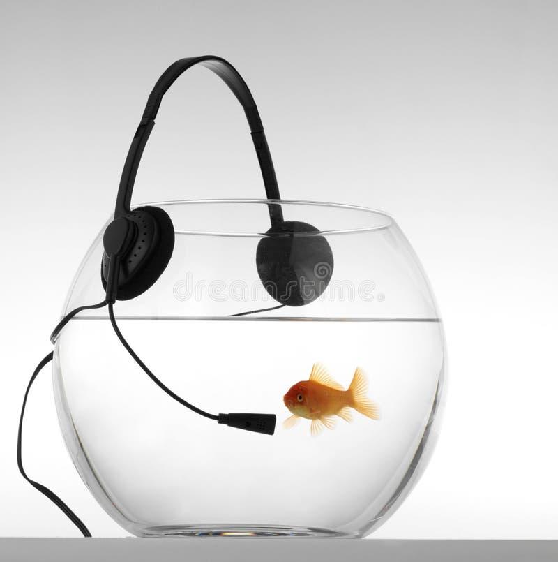 Free Red Fish Listenig Music Royalty Free Stock Photos - 5697028