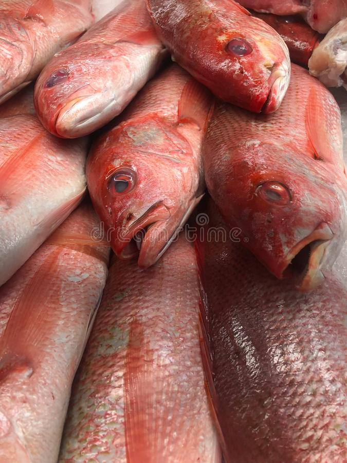 Fresh Silk Snapper on ice at a local market. Red fish ready for purchase at the market royalty free stock images