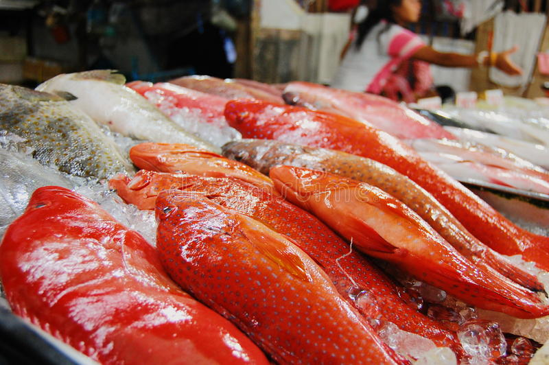 Red fish on the seafood market royalty free stock images