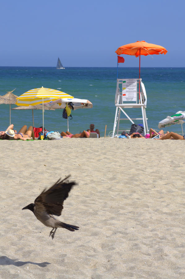Red flag on summer beach. Bird on a beach and vacationers relaxing by red flagged lifeguard stand royalty free stock photo