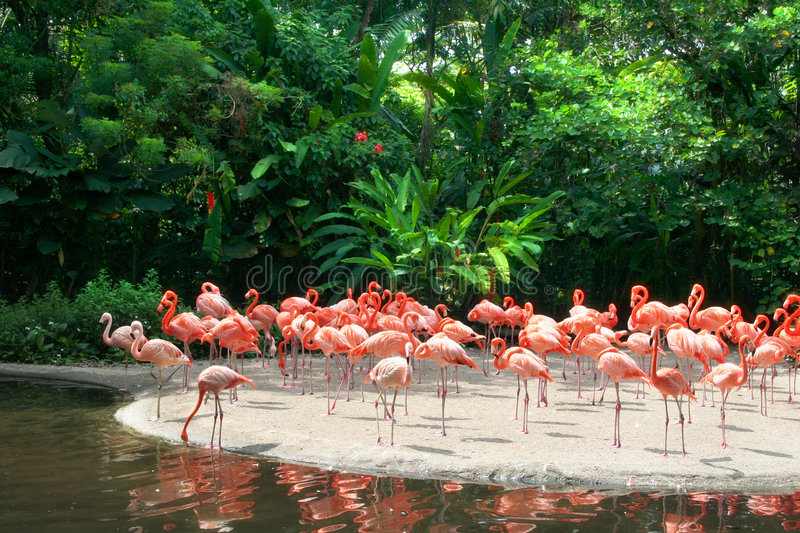 Red flamingos stock photography