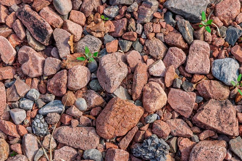 Red flint stones lie on the land of the river bank royalty free stock photography