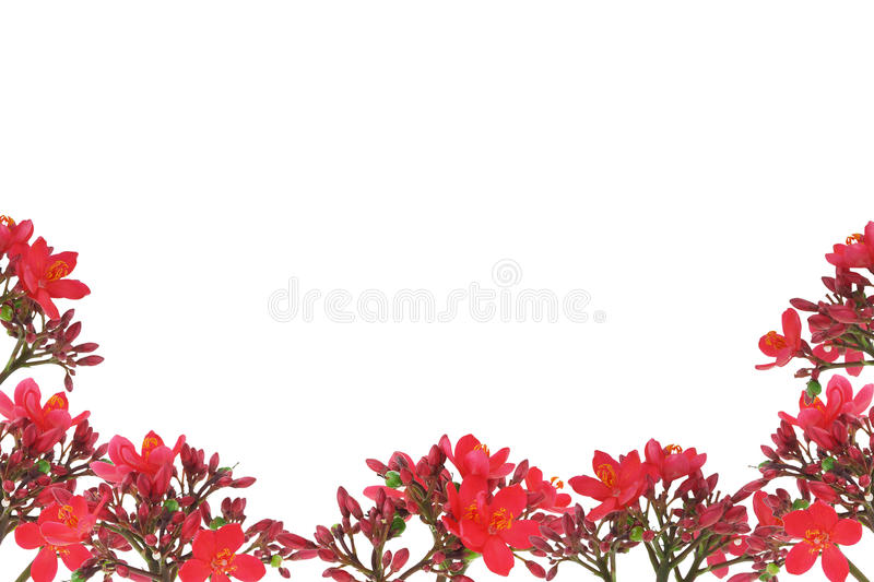 Red floral design border stock photo
