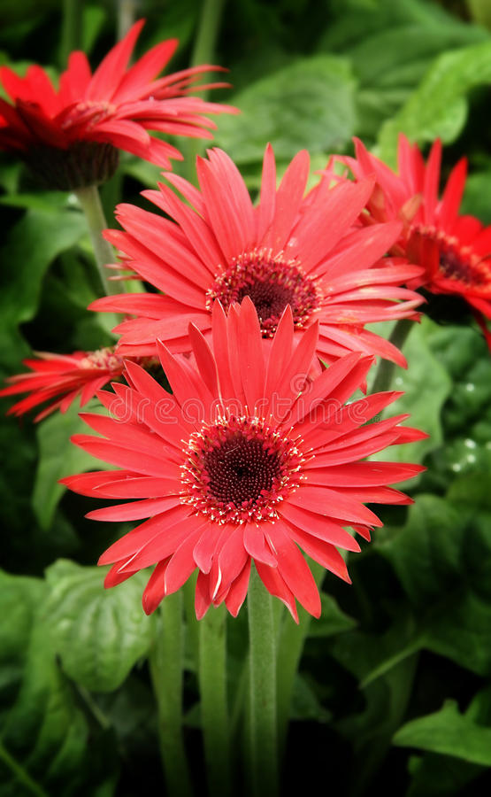 Download Red flower stock photo. Image of flora, plant, plants - 10588148