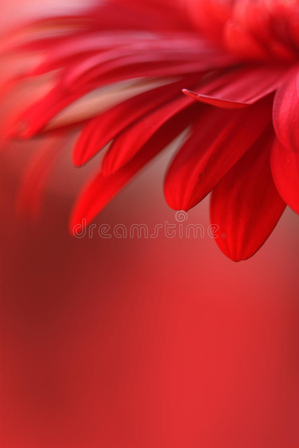 Download Red Flower Royalty Free Stock Photography - Image: 19211687