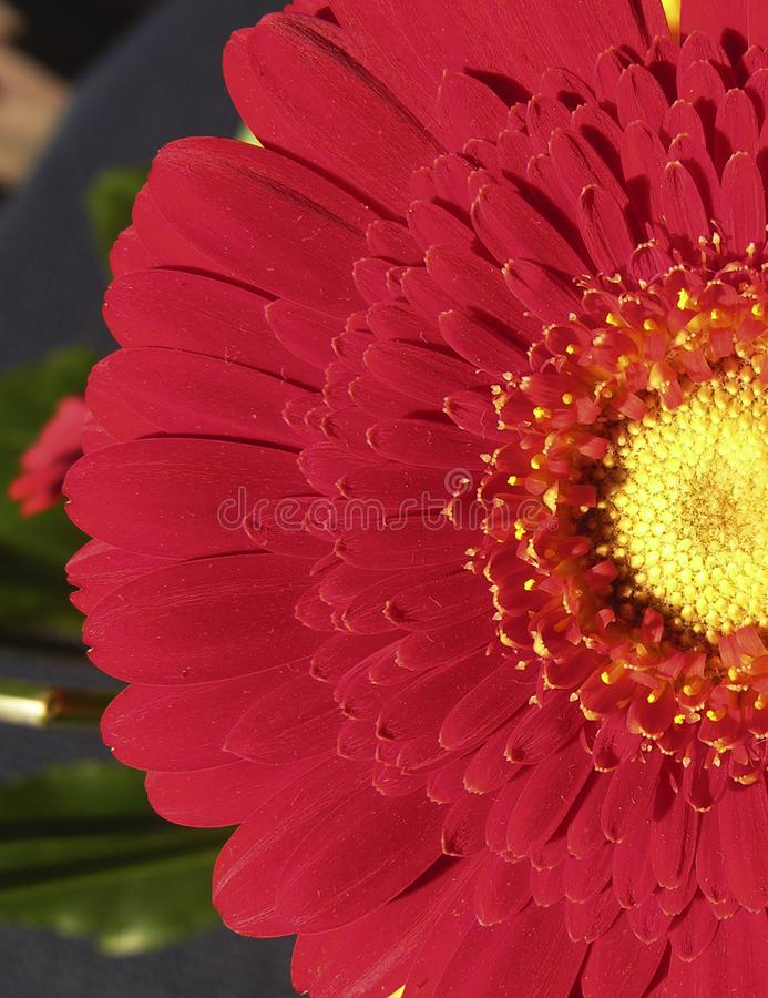 Red Flower Free Stock Photo