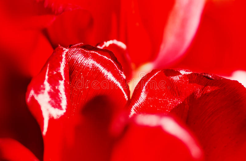 Red flower background texture, macro stock images