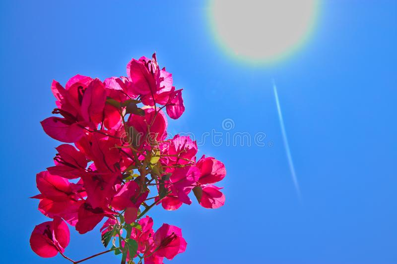 Red flower with blue sky and the sun. Space, energy, sunshine, blooming, flowers, close, up, rays, light, heaven, nature, beautiful, blossom, background stock photos