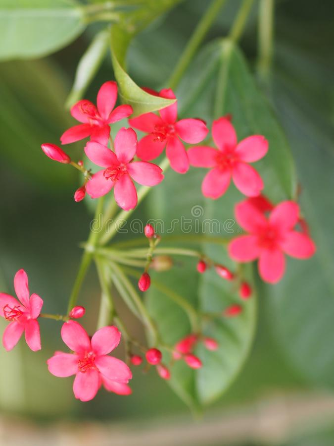 Red flower on blur background beautiful nature. Closeup red flower on blur background beautiful nature royalty free stock photos