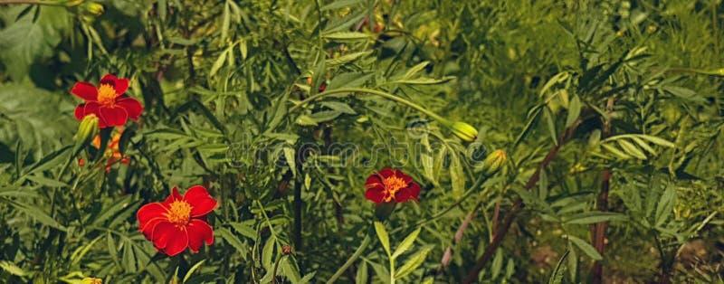 Red flower in a bush. A fancy oriental style flower in a bush stock photography