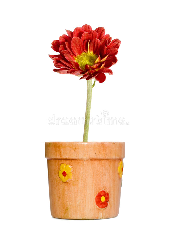 Red flower in ceramic pot stock photography