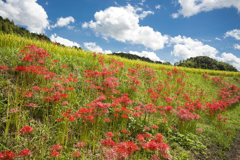 Red flower community stock image