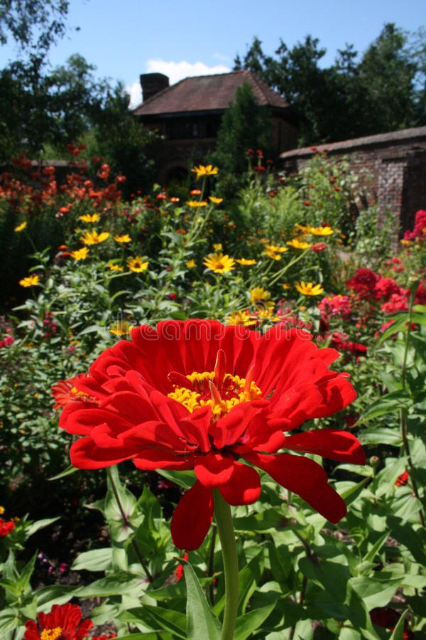 Red flower in front of brown house royalty free stock images