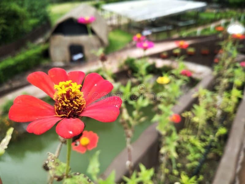 Red flower. In a garden stock photo
