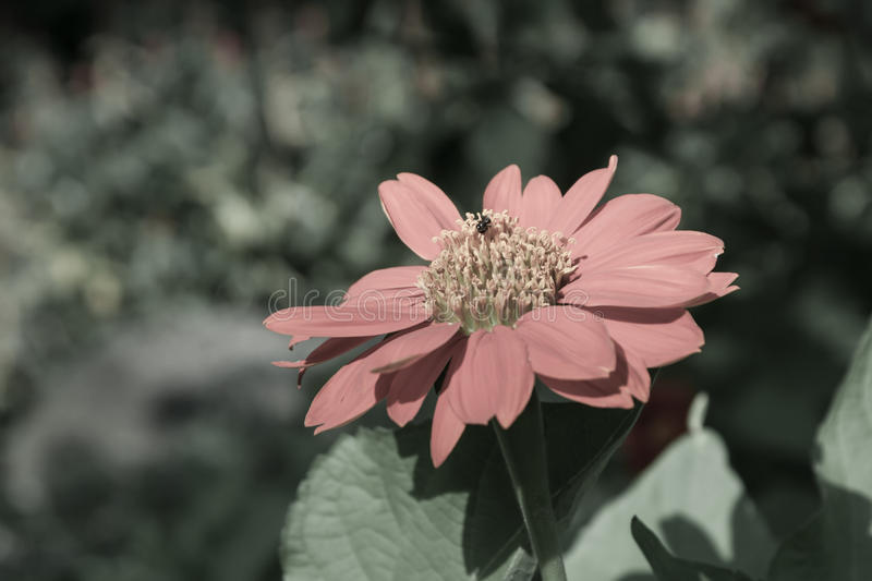Red flower in the garden royalty free stock photography