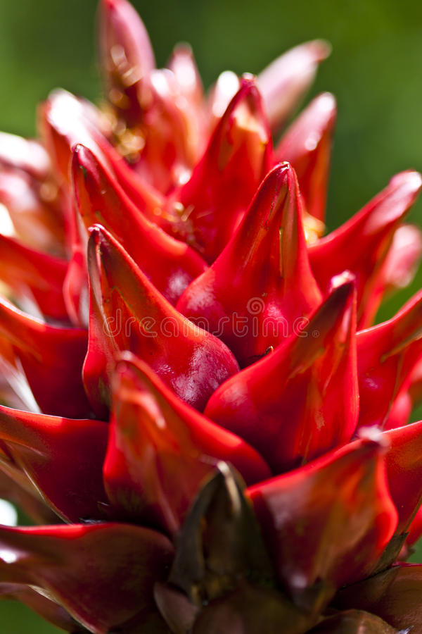 Download Red Flower In Green Background Royalty Free Stock Photography - Image: 21219057