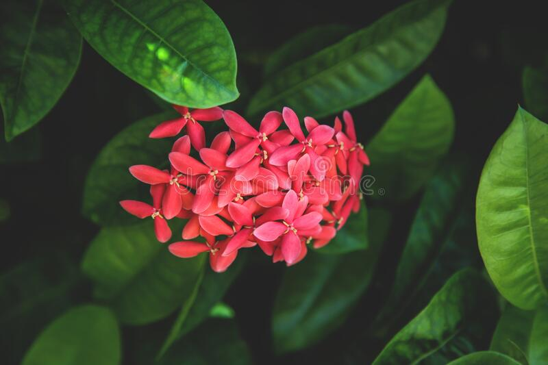 Red flower in greenery royalty free stock photography