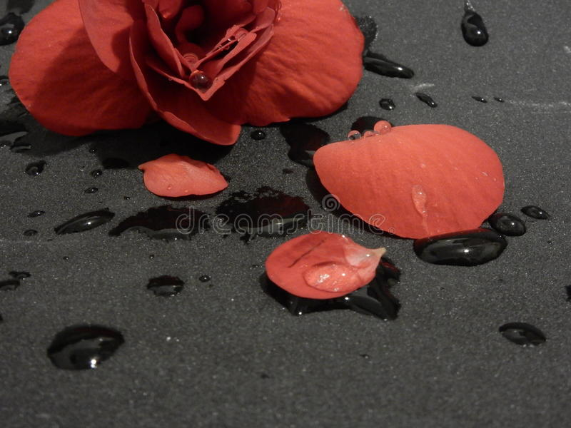 Red flower on grey sandpaper stock photography