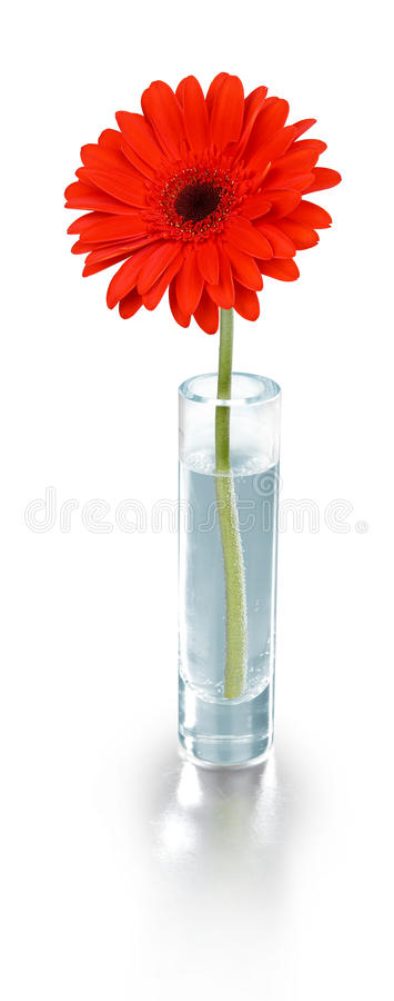 Free Red Flower In Vase - Clipping Path Stock Image - 24064871