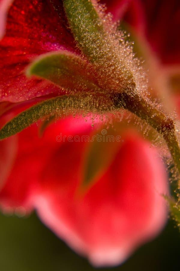 Red flower macro shot stock images