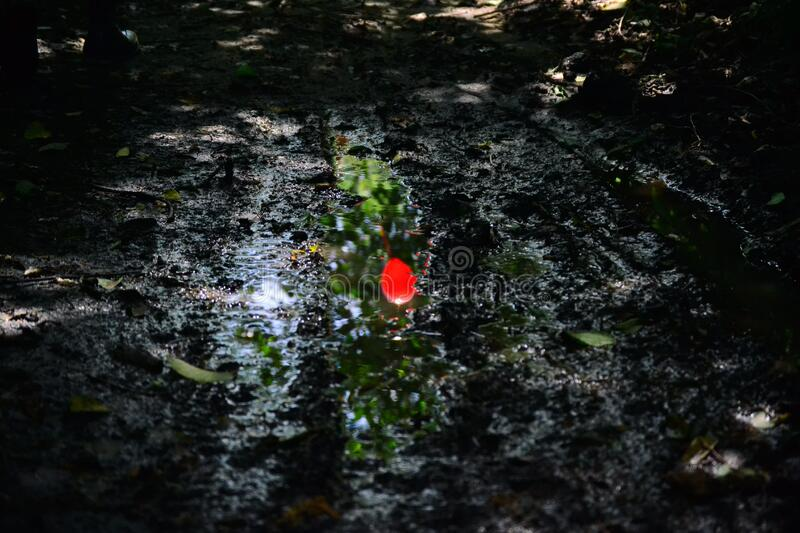 Red flower in mud stock images