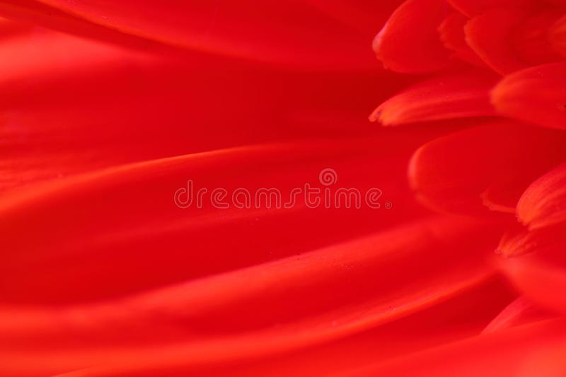 Red flower petals stock images
