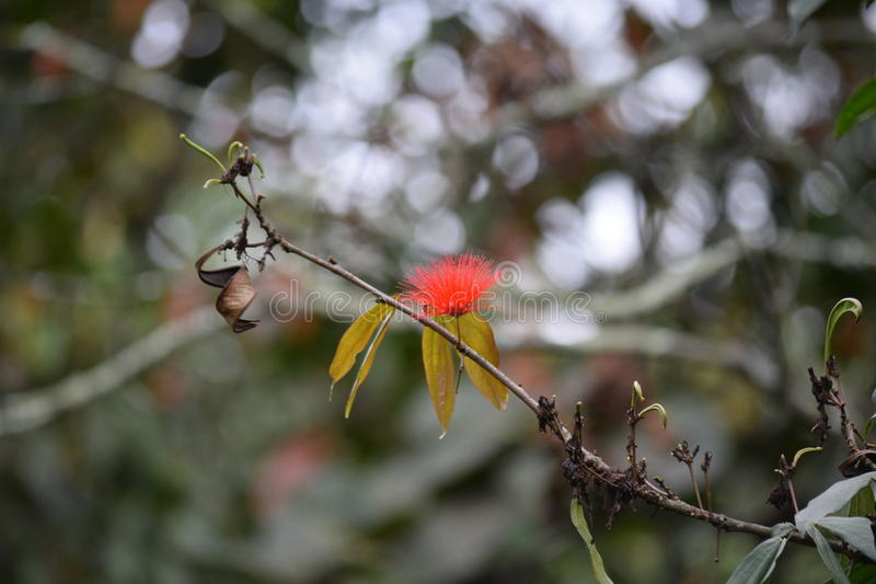 Red flower pistils thin branch with yellow leaves stock image