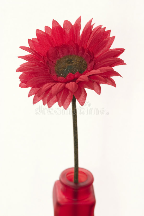Red flower in a red vase royalty free stock photo