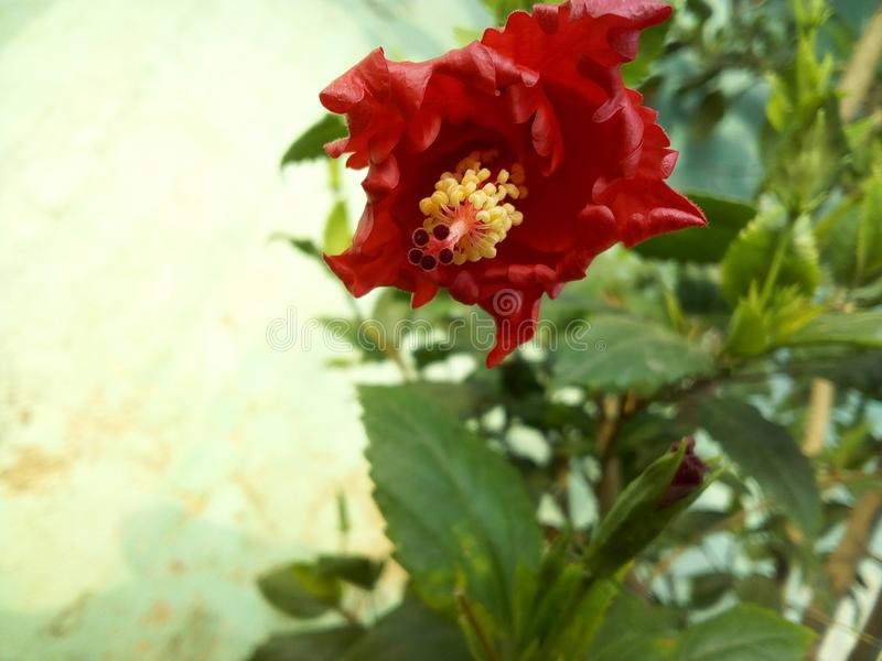 Red flower. stock photos