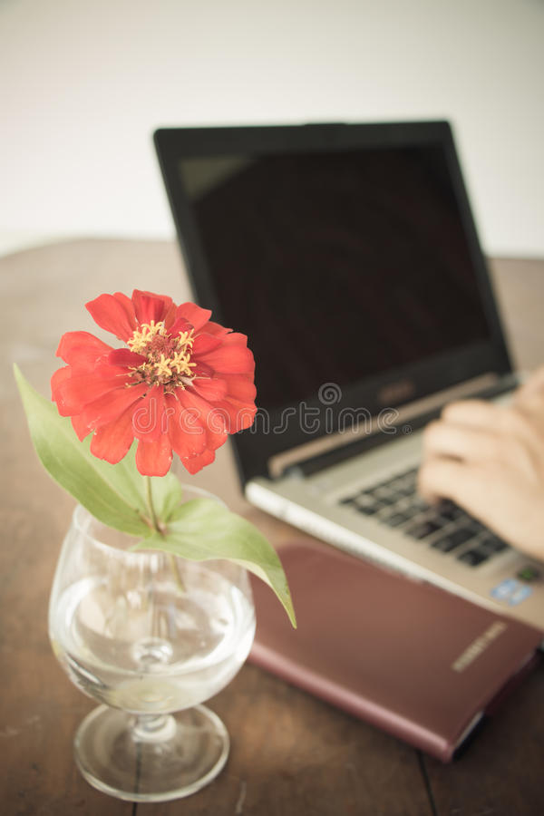 Red flower. In vase on desk royalty free stock photography
