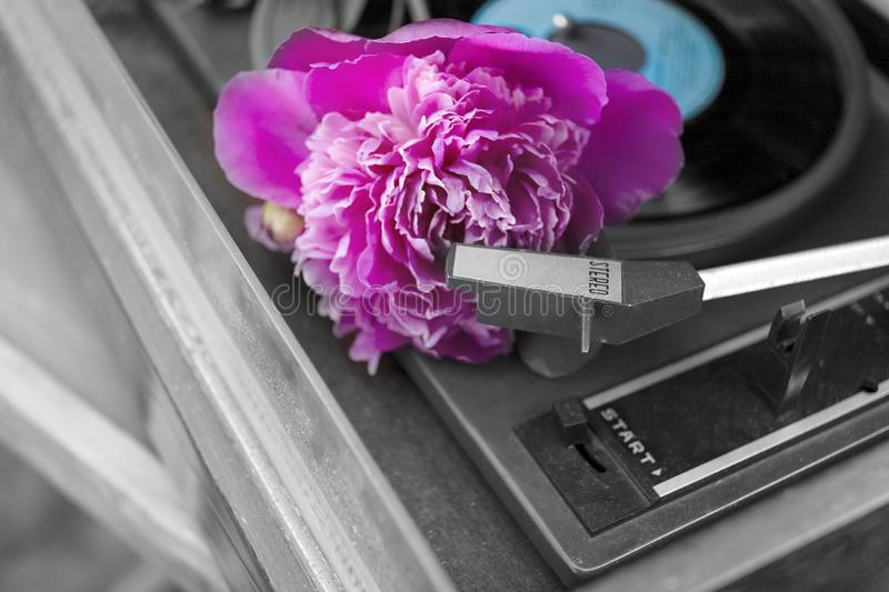 Red flower on vinyl player royalty free stock photography