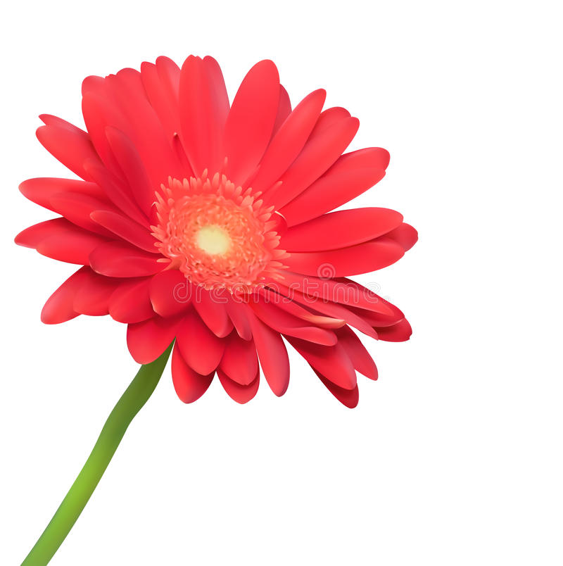 Download Red Flower On White Background Stock Photo - Image: 24719950