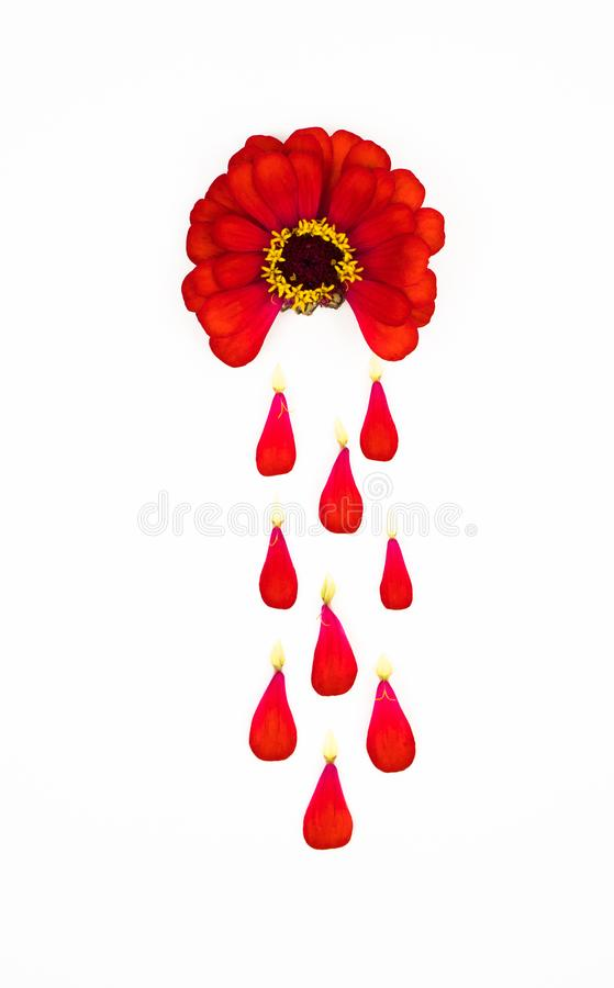 Red flower on a white isolated background depicts bleeding during the menstruation period, the petals like drops of blood. to stock photos