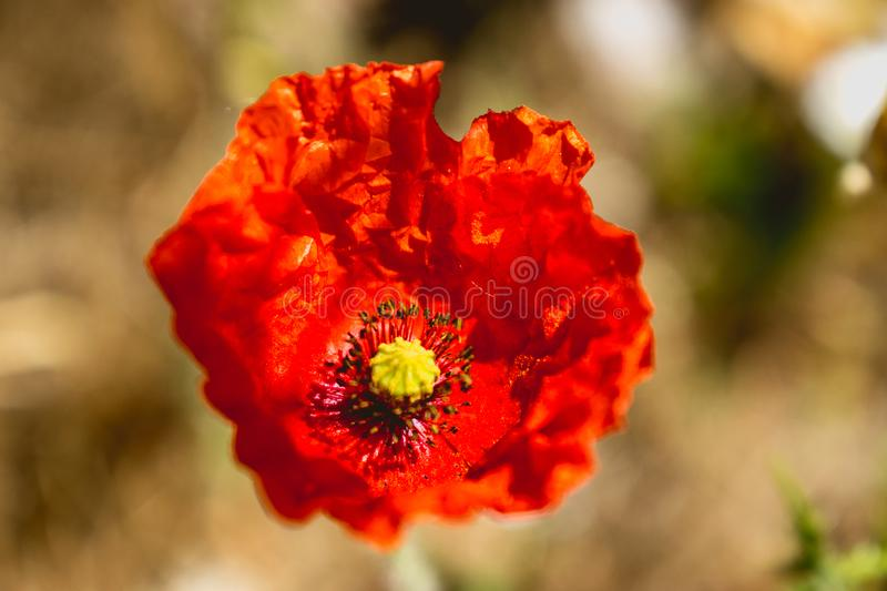 Red flower with yellow center stock photo