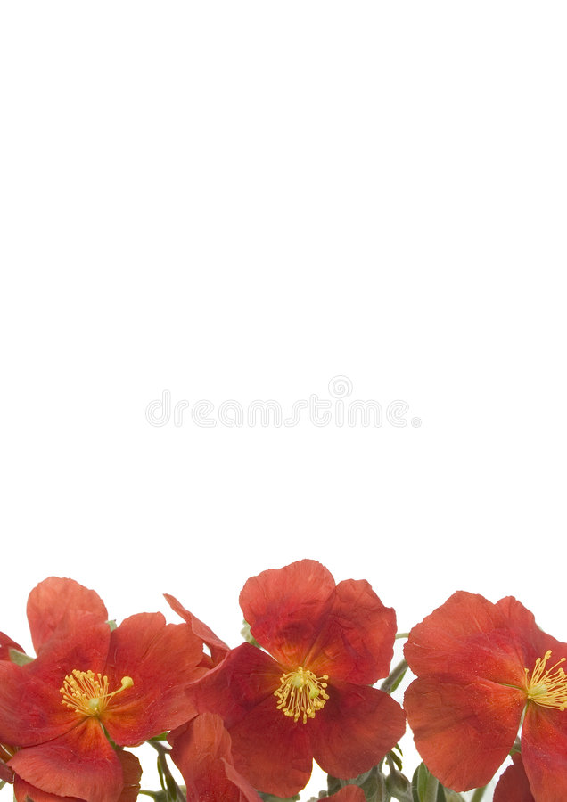 Red Flowers 2 royalty free stock images
