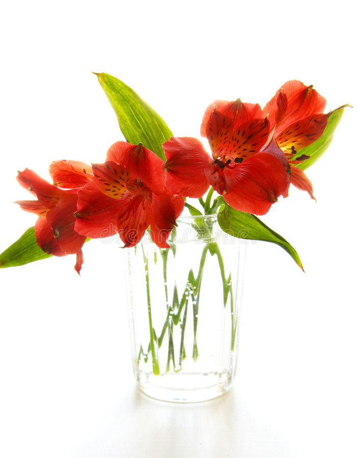 Free Red Flowers Royalty Free Stock Photos - 5325978