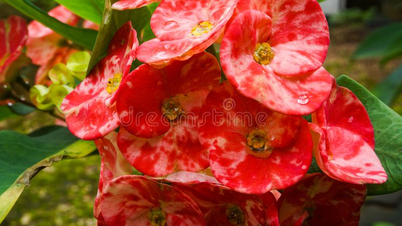 Red flowers for beautiful decorations stock photos