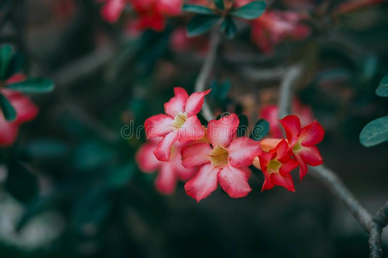 Red flowers in bloom royalty free stock photography