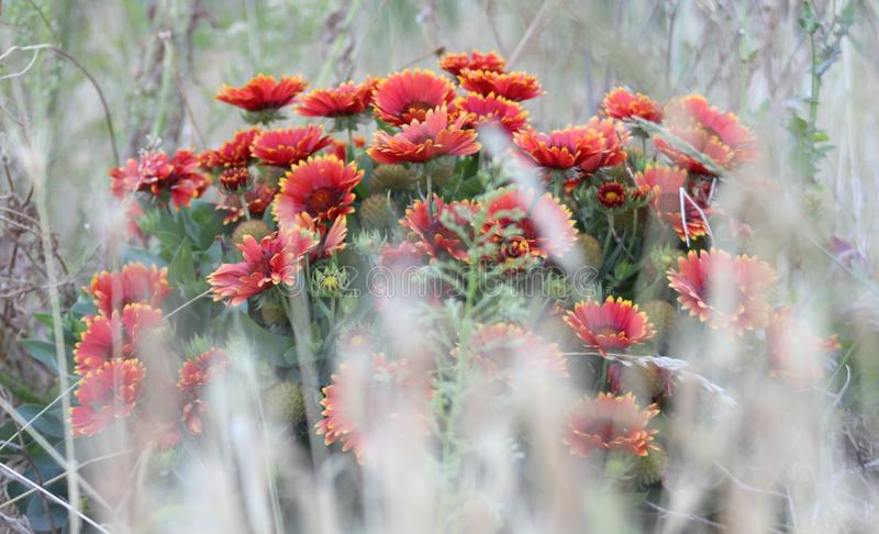 Background for text with red flowers. stock photo