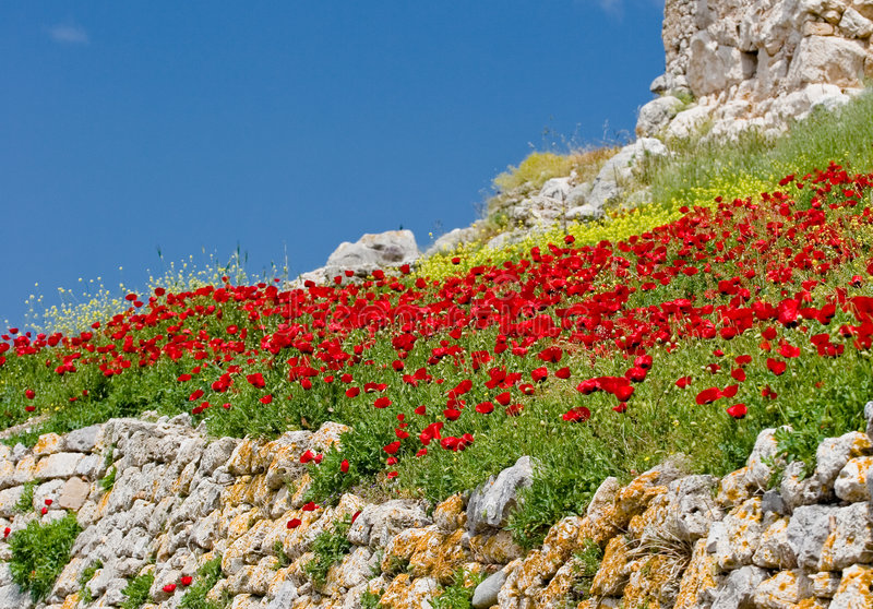 Red flowers and blue sky stock photography