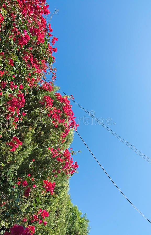 Red flowers blue sky stock photo