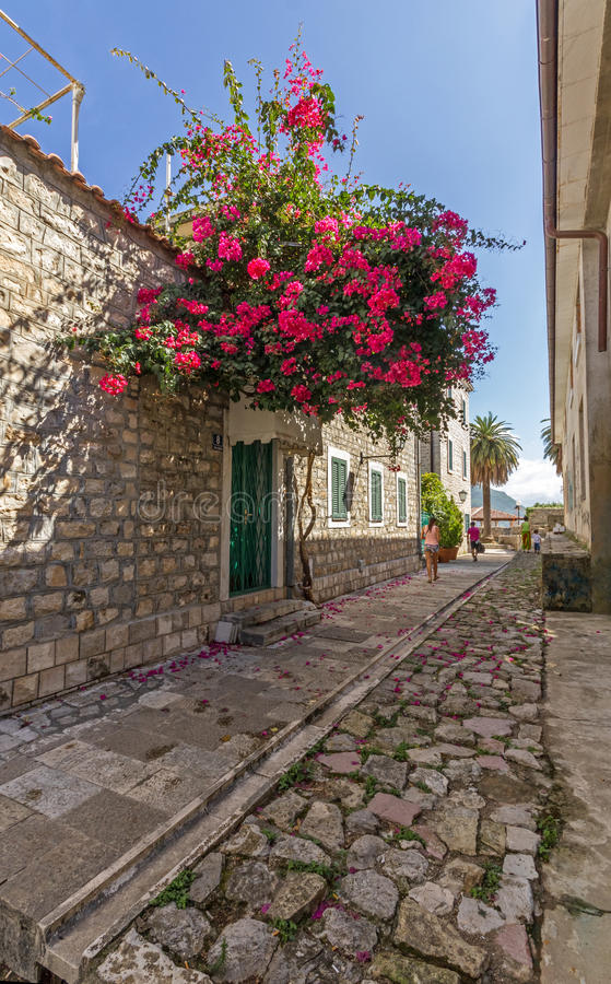 Red flowers bougainvillea in narrow city street. A quiet street in Herceg Novi. At the entrance to the house grows a huge red bush of bougainvillea royalty free stock photography