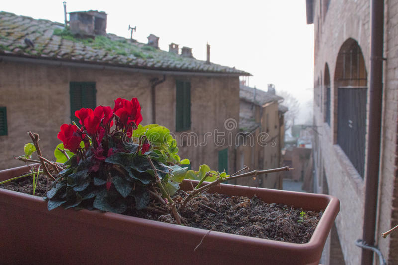 Red flowers in a flower pot. stock images