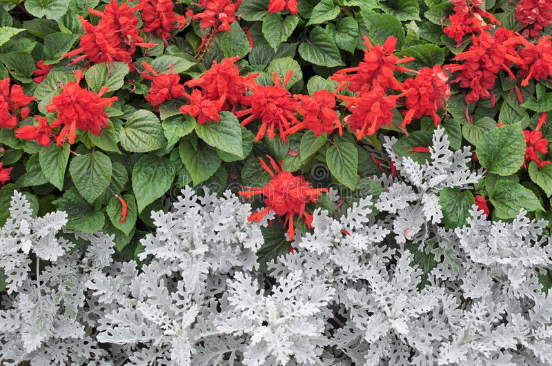 Red flowers and green leaves stock photo image 58105988 for Green plants for landscaping