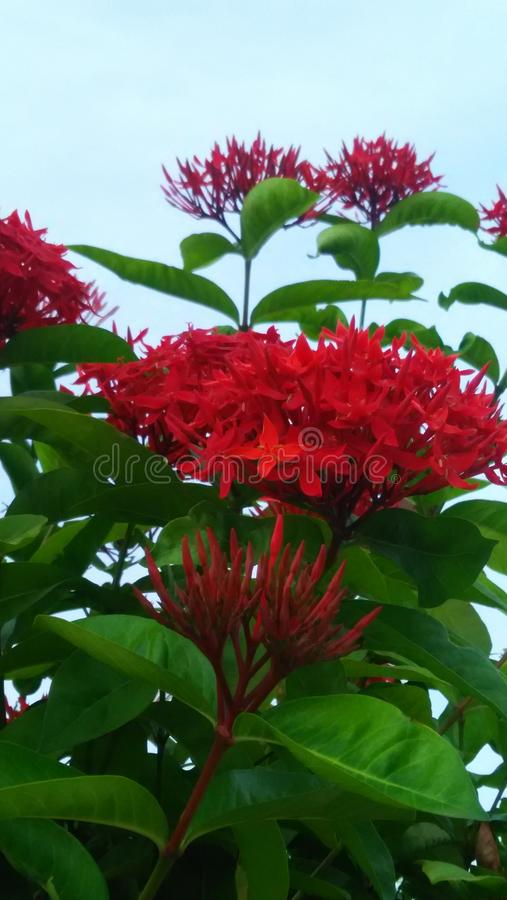 Red flowers. This image click from Chennai stock photography