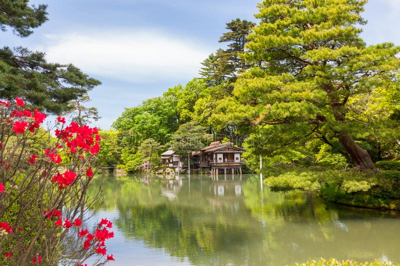 Red flowers in Japanese garden in full spring. A beautiful Japanese garden in full spring. Kenrokuen Garden in Kanazawa, Japan. Classified as one of Japan`s royalty free stock image