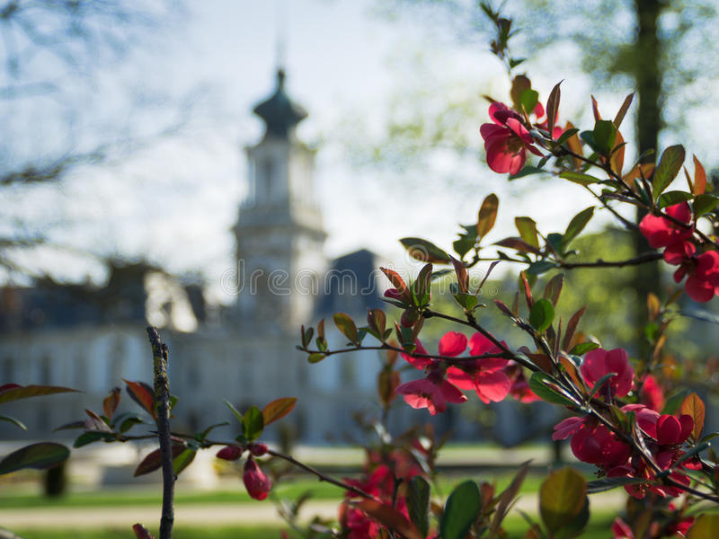 Red flowers in the Keszthely, Hungary stock photography
